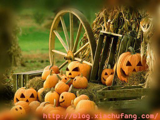 Halloween~`