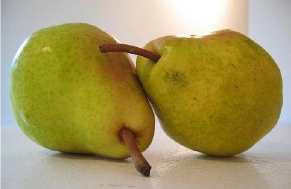 a pair of pears.jpg